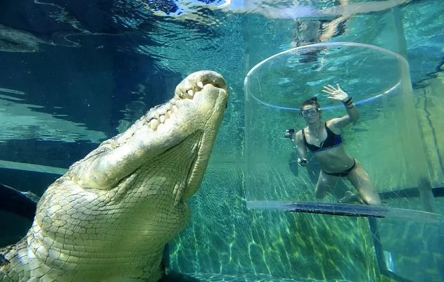 Thrill-seeker dives with 17ft. saltwater crocodile