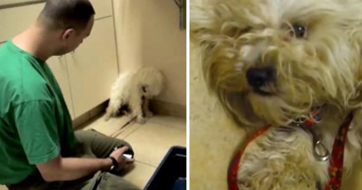 Un petit chien est pétrifié à une heure de l'euthanasie. Mais le vétérinaire refuse d'arrêter de tenter de le calmer