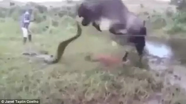 The dramatic fight was caught on camera