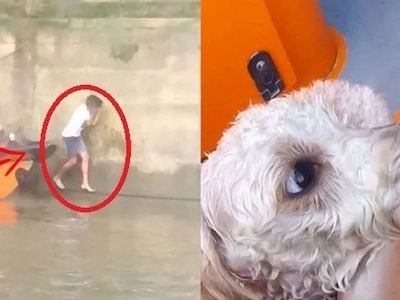 A brave man spotted this dog drowning in a city channel. Minutes later, he was keeping a terrified animal in his hands