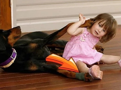 Helpless mother watches in horror as Doberman drags toddler across the yard because of this shocking reason!
