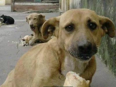 Le preguntaron a este niño por qué alimentaba a los perros en la calle, su respuesta es para llorar