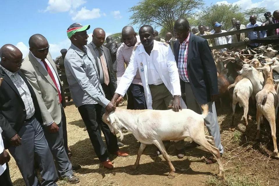 Je, William Ruto alikuwa mtoto wa tabia za aina gani? Mamake afichua