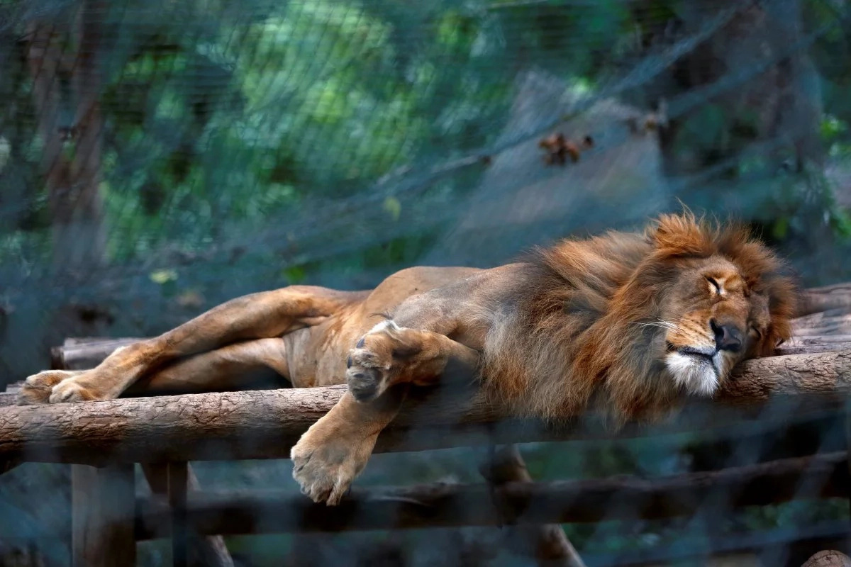 50 animals 'starve to death' at Venezuelan zoo