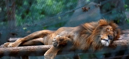 Reason why this animals starved to death in empty zoo will make angry