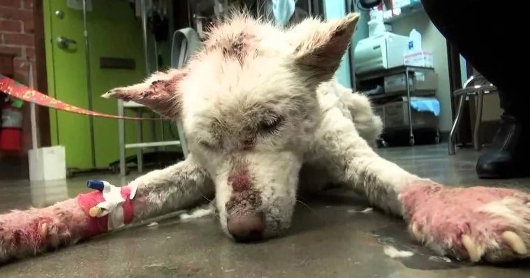 You Will Not BELIEVE How This Dog Survived And How Beautiful She Is Now