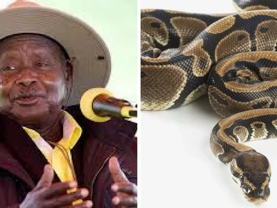 Giant python  sneaks into President Museveni's home during his birthday party