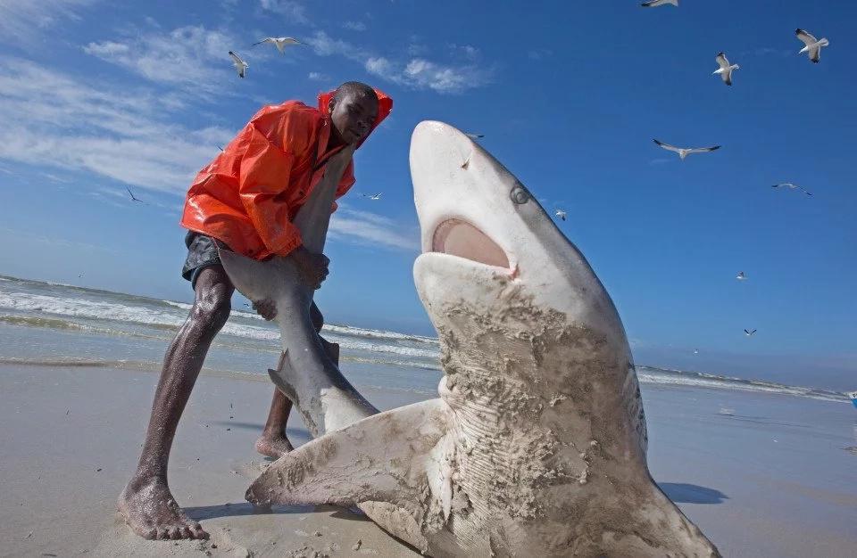 Valiente hombre intenta regresar un tiburón al mar
