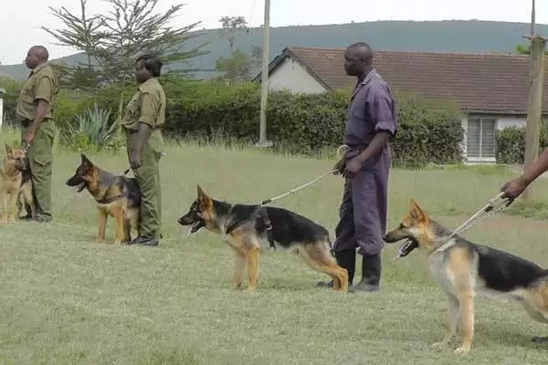 After spending almost KSh 800,000 to buy 4 dogs, Jubilee governors vows to buy more if re-elected