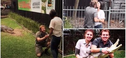 Crocodile handler proposes to girlfriend while feeding huge 4.5-meter crocodile