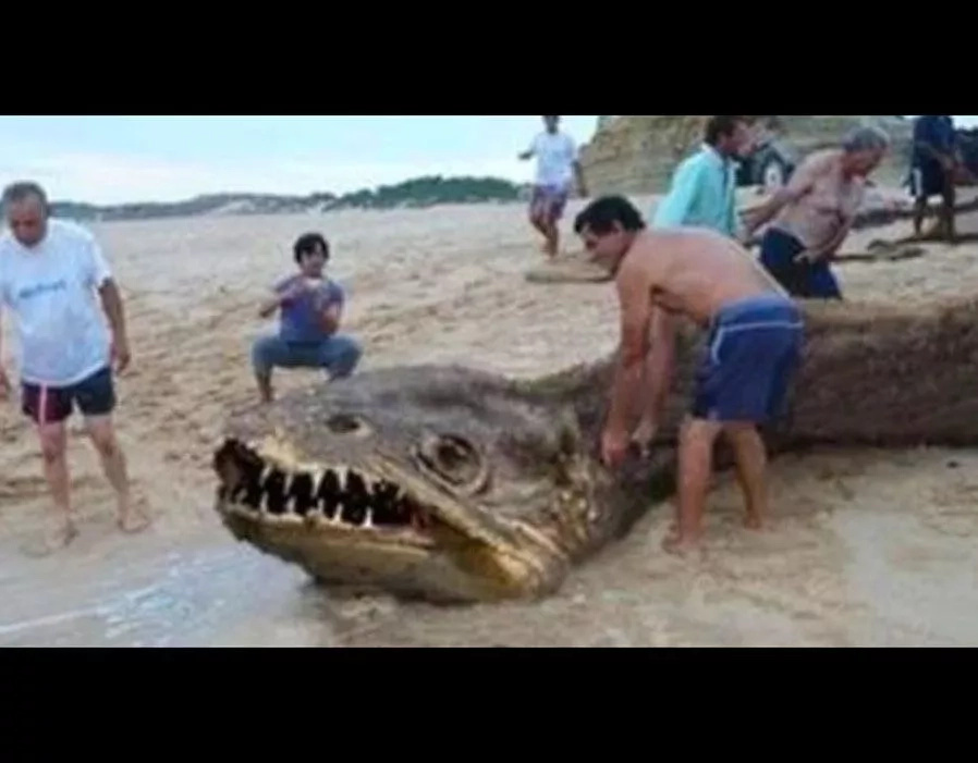 10 unknown sea monsters found by people that will scary you to the death
