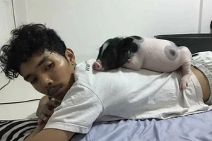 See the adorable relationship of this boy and his cuddly pig in these pictures