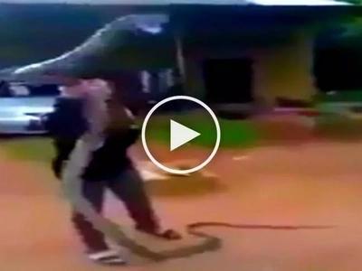 Terrifying encounter! Daring farm girl wrestles with deadly giant cobra