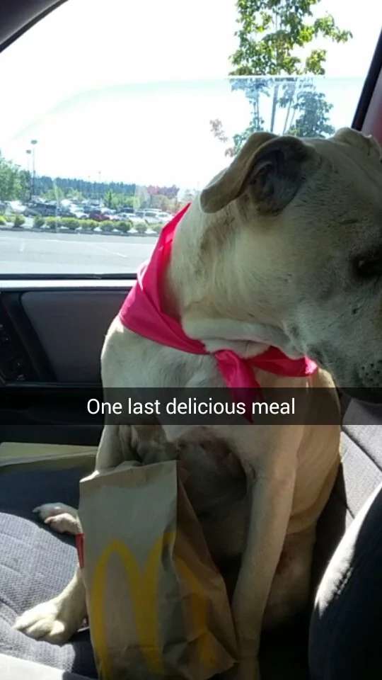 Family gives their lovely dog her best last day ever (PHOTOS)