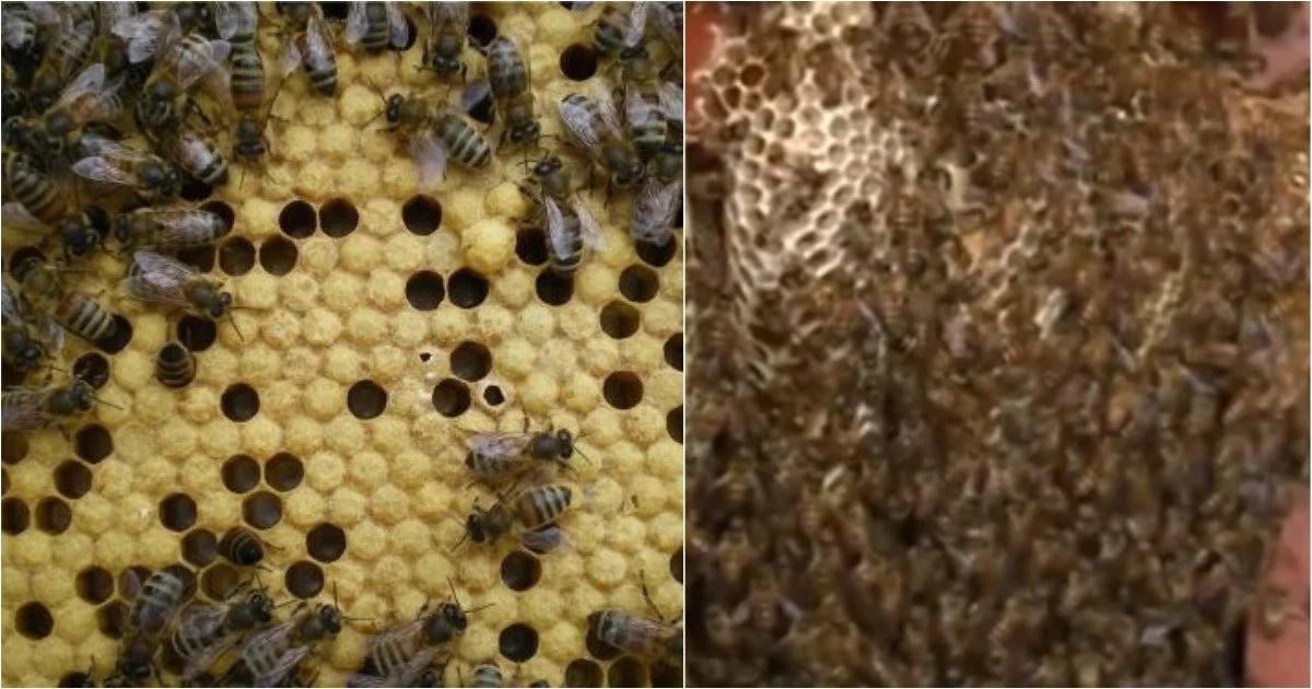 Brave family has been living with an open beehive in their living room for 12 years (photos)