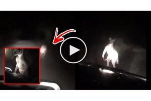 Netizens spotted something running in front of the car. You'll be surprised after realising what a creature it was!