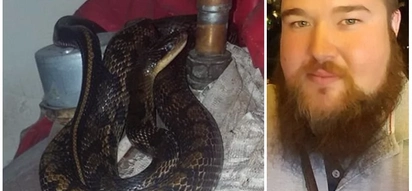 Man finds 2.4 meter long snake relaxing on his hot water boiler when he opened it