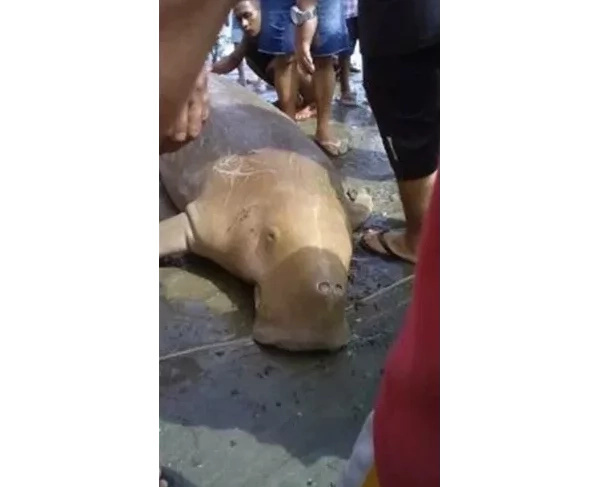 You won't believe that: one more dead giant sea creature in Sarangani