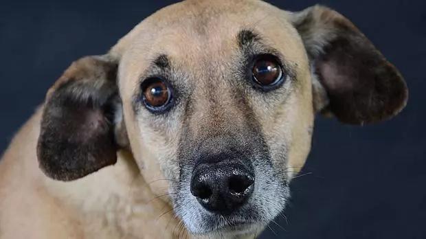 Ella adoptó a un perro callejero y el le agradece de una forma que te dejará sin palabras