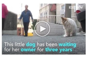 Heartbreaking! This dog has been waiting for his paralyzed and sick owner for 3 years! Another 'Hachiko'?
