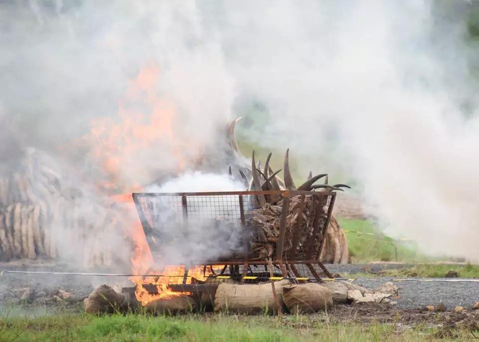 Kenya makes history in largest ivory burn