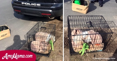 Caged dog is found abandoned on a roadside. Favorite toys and a blanket that's all he has