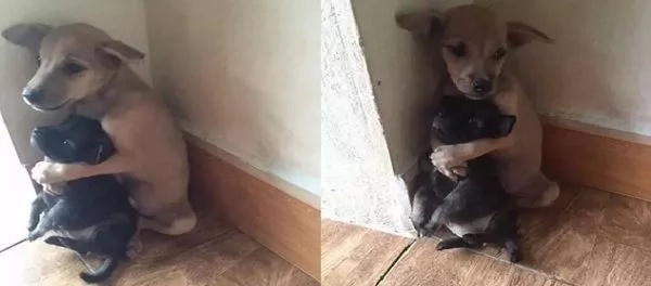 PHOTO: Puppy hugs his friend after being abandoned