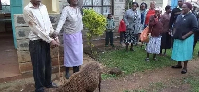 Man in Limuru Caught Having Sex With A Sheep