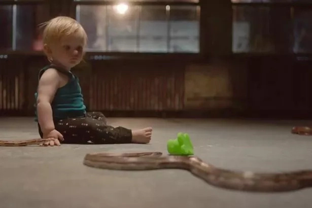 A toddler watches a toy snake. Research shows babies are not born with a natural fear of snakes. Photo: Daily Mirror