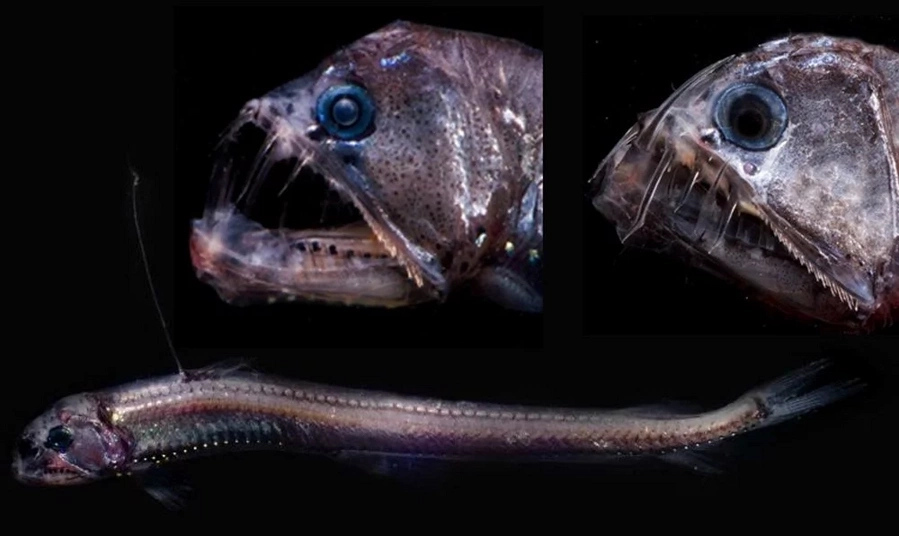8 unbelievable sea monsters which live in deep-waters