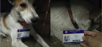 CUTE stray dog is a staff in a QC school!