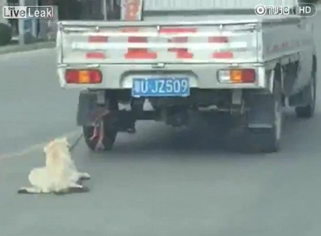 Dog had been dragged behind car at high speed in China