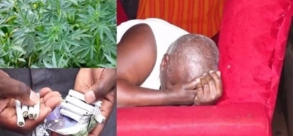 Police bust 64-year-old Murang'a woman selling bhang to students(photos)