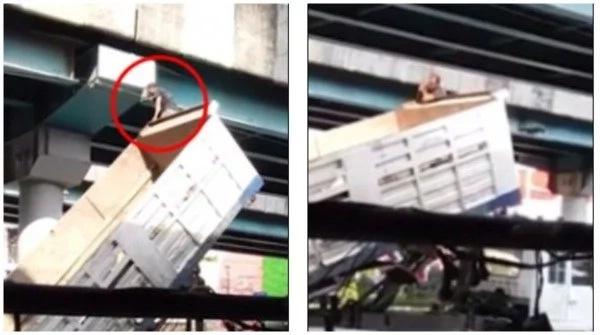 Daring man rescues terrified kitten stuck 30 FEET above busy street (photos, video)