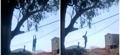 Neigbours catch burglar and hang him from tree by his wrists in broad daylight (photos, video)