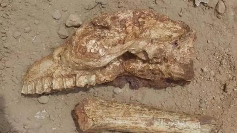 Hallaron restos de una EXTRAÑA criatura en Argentina