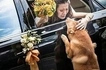 Bride's emotional goodbye with her dog goes viral