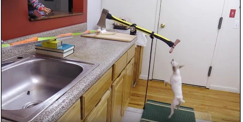 Ingenious Inventor Uses His Dog To Help Him Cook Turkey