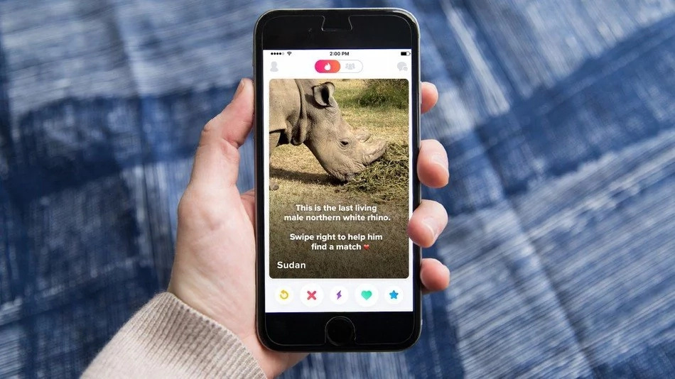 Kenyan male Rhino joins dating site and Kenyans love it