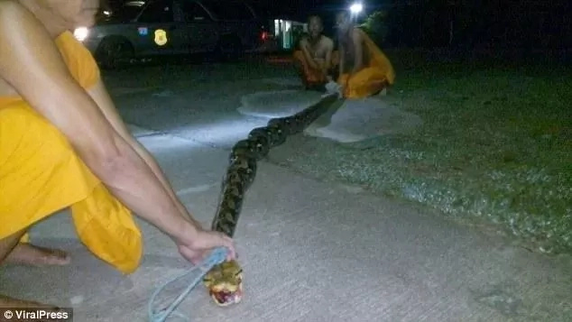 God is great! 8-meter long python attacks nun, bites and tries to squeeze life out of her