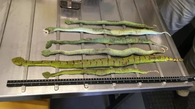 Deadly cargo! Police find shoe box consignment full of SNAKES, spiders and SCORPIONS (photos)