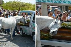 Caballo se despide de su dueño en su funeral, las imágenes son realmente conmovedoras