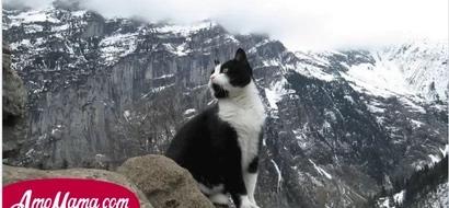 Él se perdió en las montañas y no encontraba la salida, pero fue encontrado por un gato