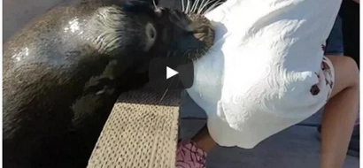 Panic as sea lion grabs and drags a young girl into water (photos)