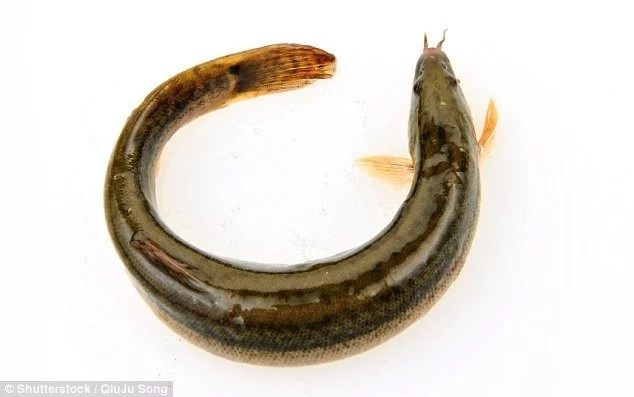 Drunk man forced to undergo surgery after sticking 2 live fish into his BEHIND (photo)