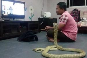 Hombre se casó con una serpiente porque cree que es su novia reencarnada