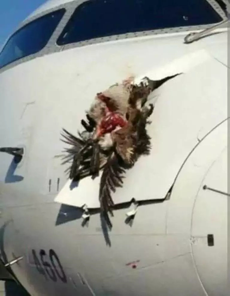 British Airways planes carrying Christian passengers were mysteriously attacked by birds