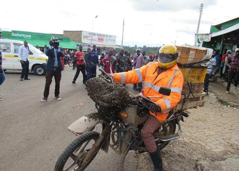 Kabarnet residents left stunned after swarm of bees land on motorbike