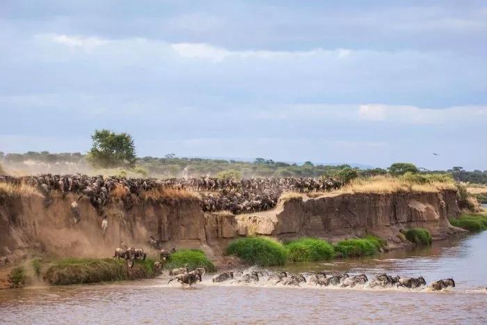 Kenya ranked best Safari destination in the world despite volatile political environment