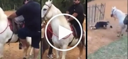 VIDEO: Horse ATTACKS obese man who tried to ride on its back; the ending will make you LAUGH!